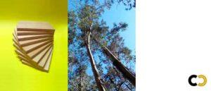 contrachapado de eucalipto